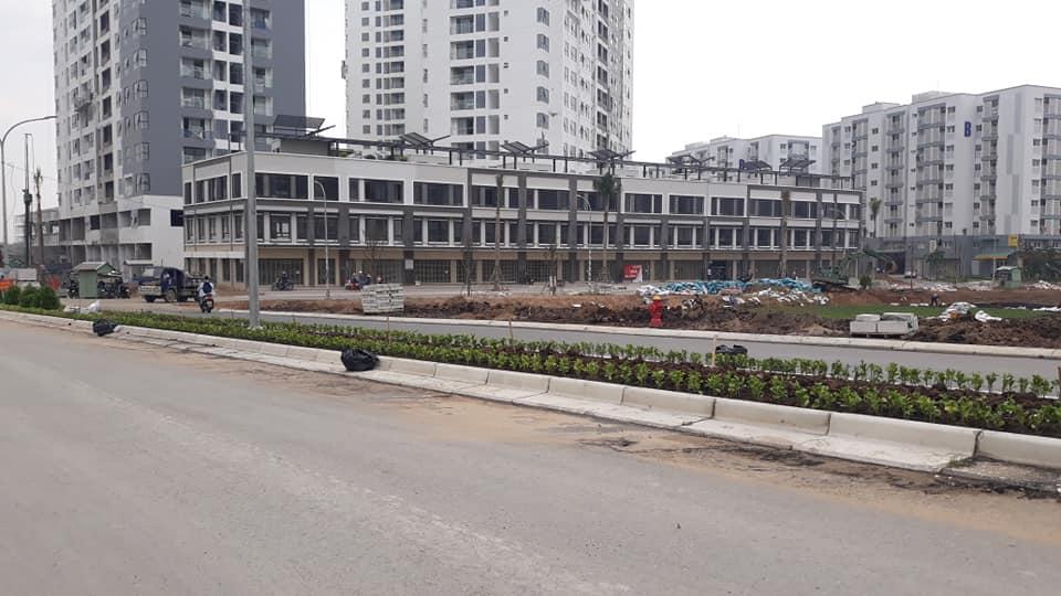 Chủ đầu tư trồng cây xanh tại khuân viên dự án Mizuki Park Bình Chánh